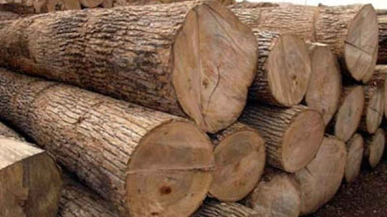 Wood Exports