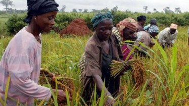 Rice firm in Nigeria to create 7000 jobs in 2016