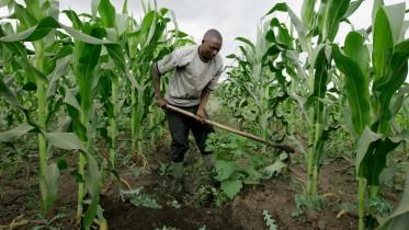 Farm input