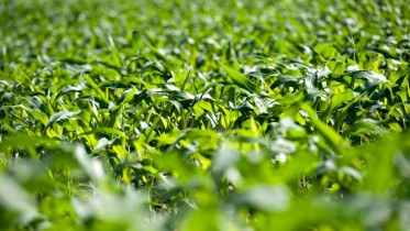 Corn, Soybeans Decline As Favorable Weather May Boost U