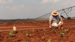 white farmer