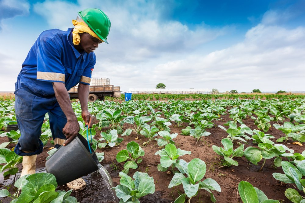 Food Security - Investors King