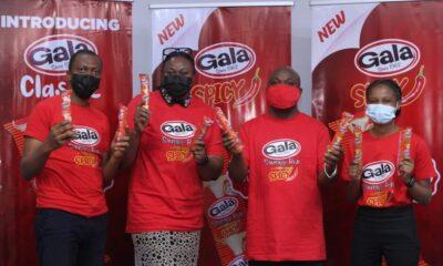 Gala Spicy - Investorsking